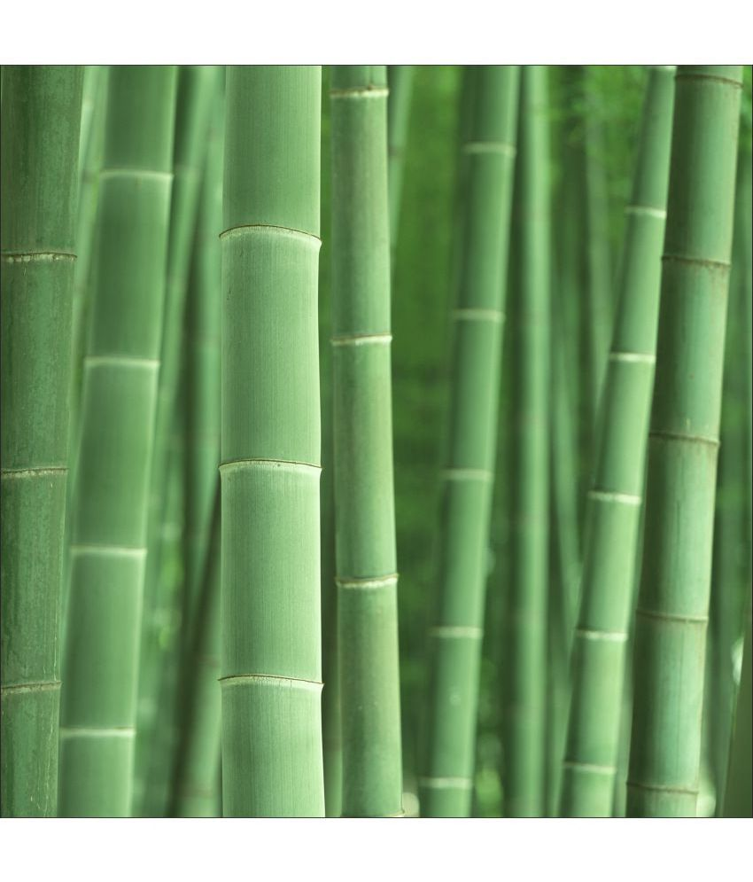 Retcomm Art Digital Print Wall Art Green Bamboos Others