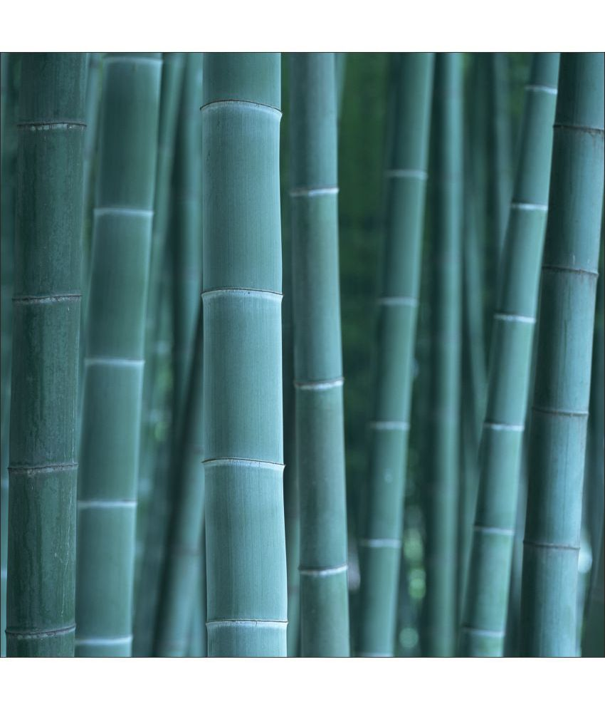 Retcomm Art Digital Print Wall Art Blue Bamboos Others