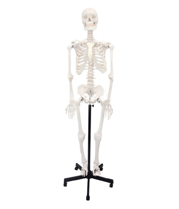 nsaw human skeleton articulated fiber model without stand - white, Skeleton