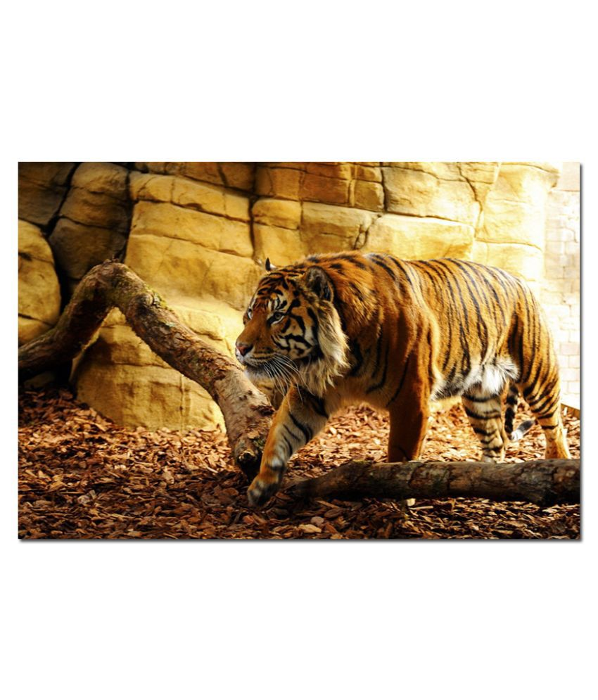 Anwesha's Water Active Wallpaper Poster 20 Inch X 30 Inch - Tiger T062
