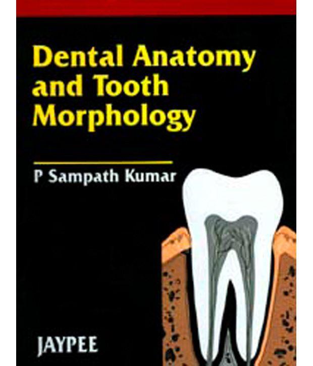 Dental Anatomy And Tooth Morphology Buy Dental Anatomy And Tooth