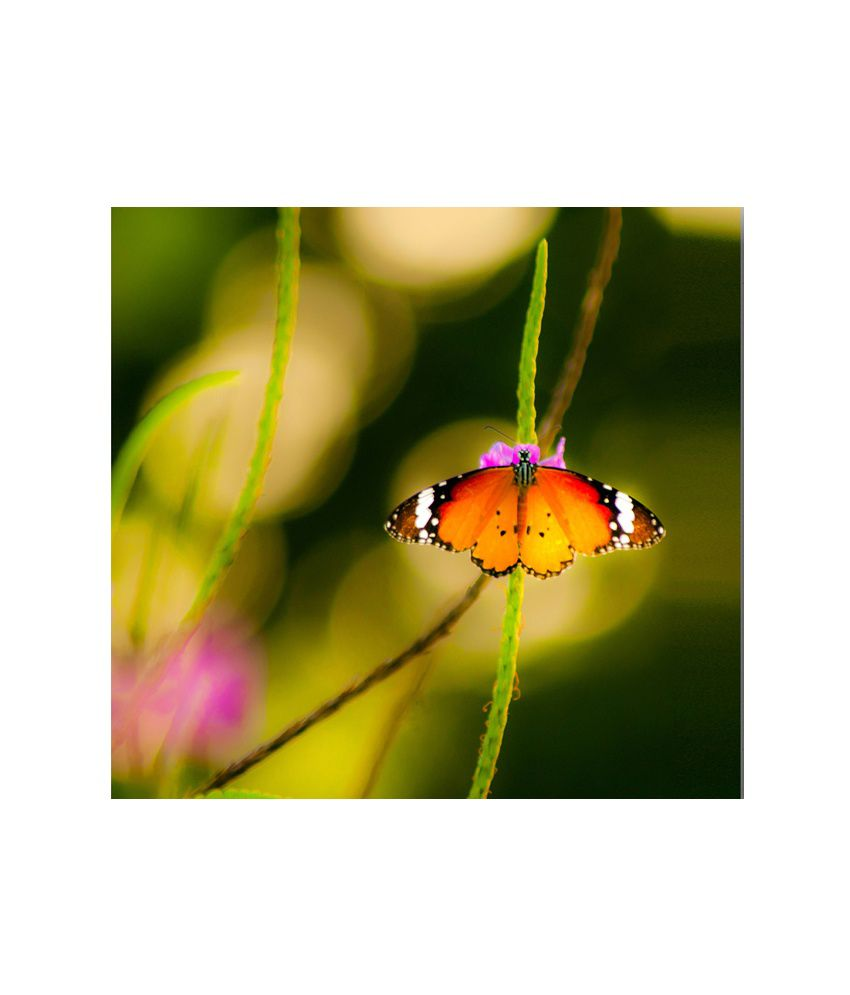 Thefrozenmoment Classic Butterfly 2 Art Print
