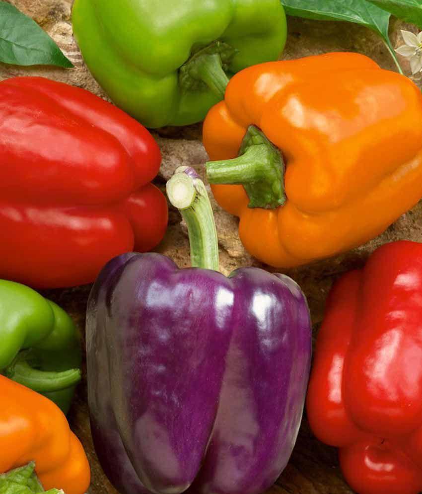 Nelesa Gardening Capsicum Bell Color Mix Pepper - 20 Seeds