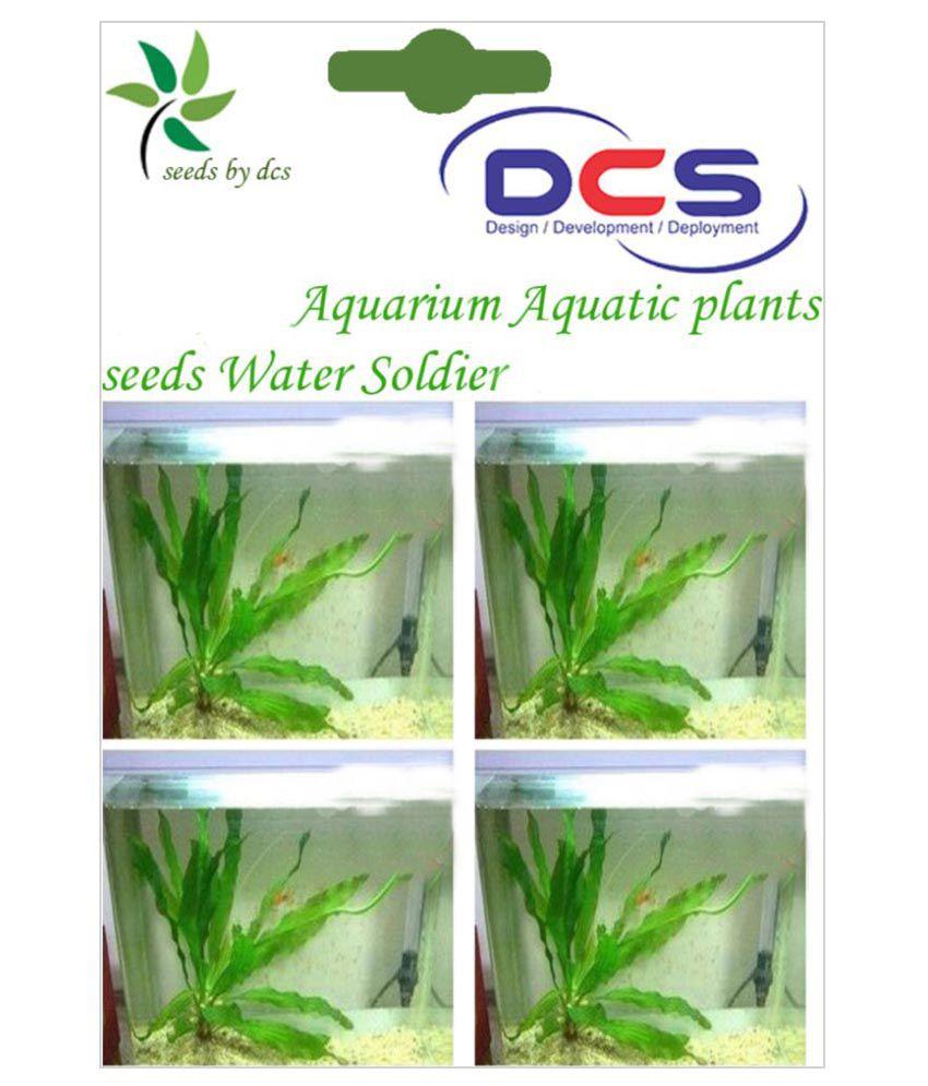DCS 10Pcs Aquarium Aquatic Plants Grass Seeds: Buy DCS 10Pcs