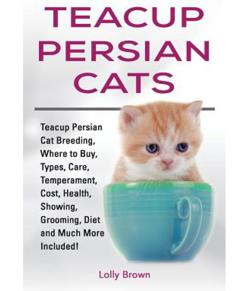 Teacup Persian Cats
