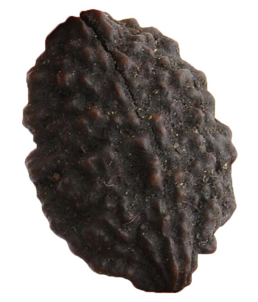 Avaatar Certified 2 Mukhi 30MM Natural Rudraksha Bead 2