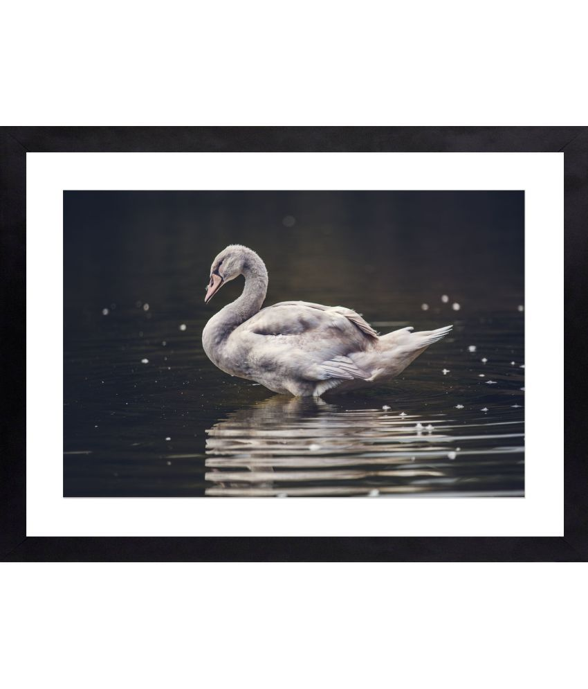 Craftsfest Amazing Photography Of Swan Canvas Painting With Frame Single Piece