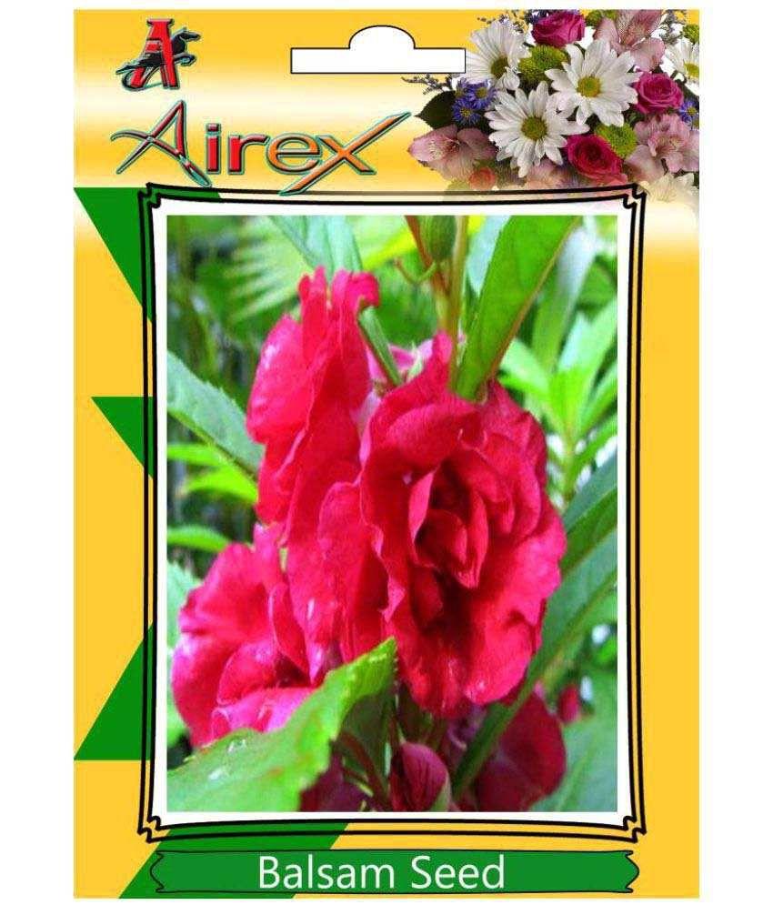 airex balsam flower seeds