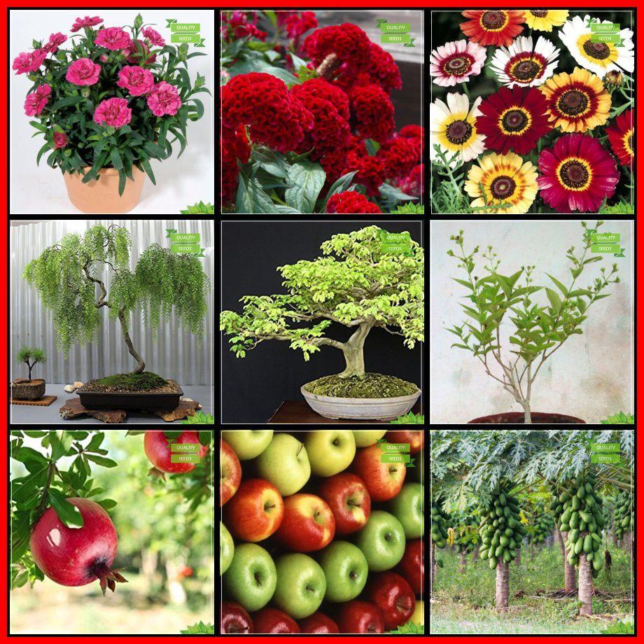 Seeds India Combo Flower Seeds & Fruit : Pomagranate, Apple ...