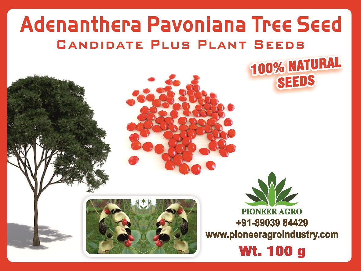 Adenanthera Pavoniana Seeds/Coral Wood Seeds Red Lucky Seeds 100G