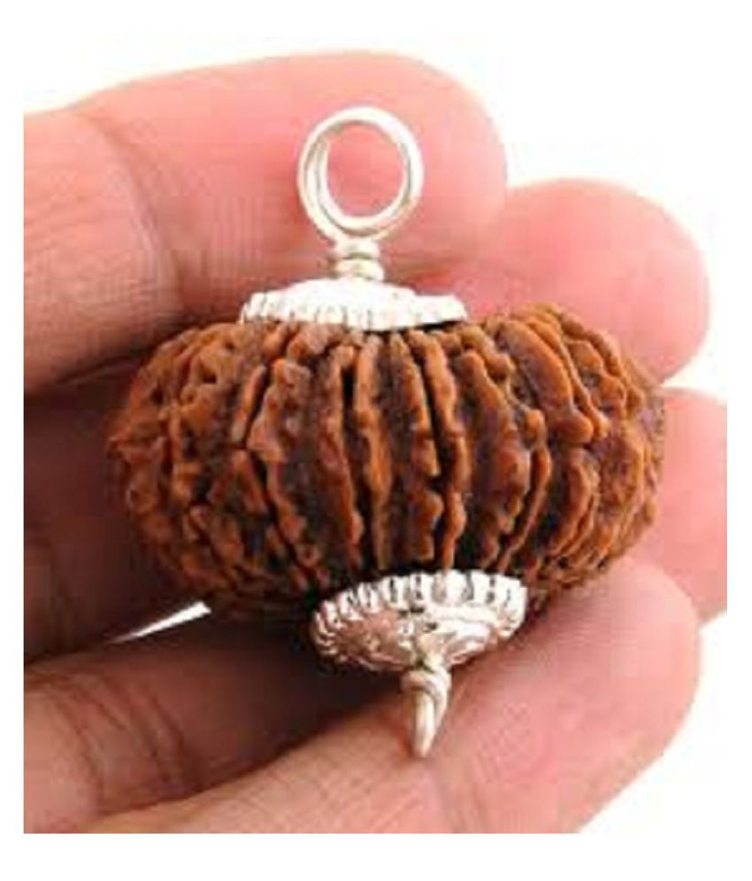 9STARS GALLERY   Nepal 17  Mukhi Valuable Rudraksha  With Silver Pendant  Lab By Certified