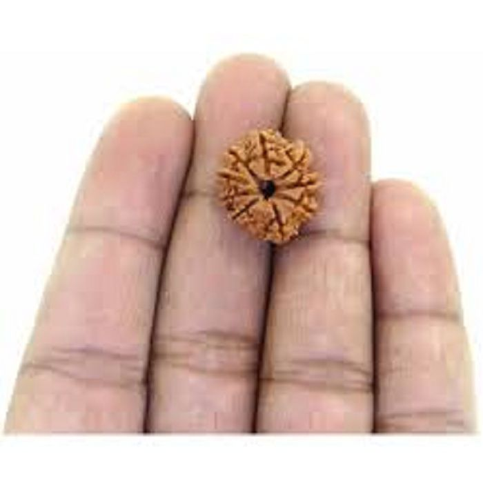 9STARS GALLERY  Nepal 9 Mukhi Natural Rudraksha With Silver Pendant By Lab Certified