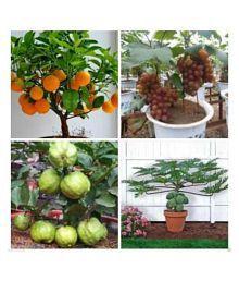 Garden Plants Buy Garden Plants Gardening Tools Online