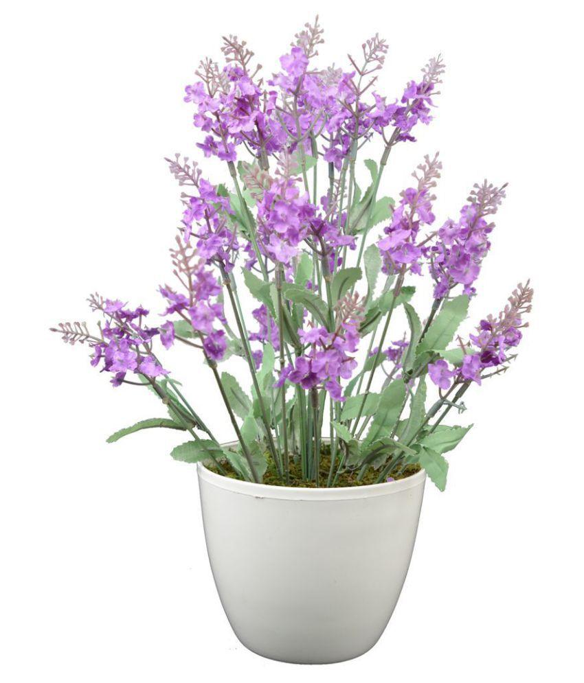 Thefancymart Hyderanga Purple Greens With Pot Plastic - Pack of 1