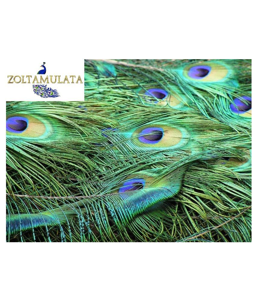 Zoltamulata® Very Big Size Beautiful Natural Peacock Feathers 10piece with Height 65cm Each