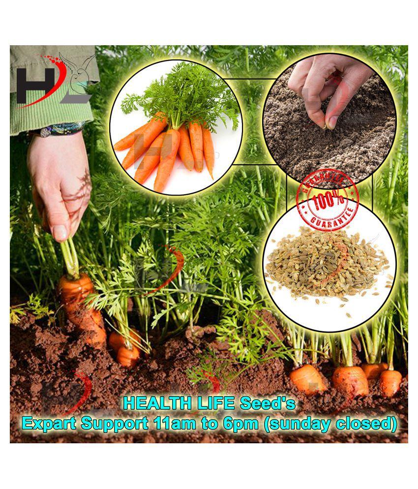 HL Carrot Seeds / Gajar / 50 seed's