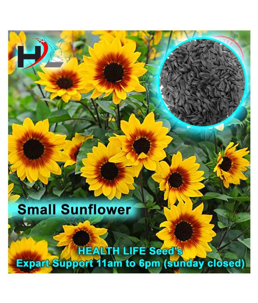 HL Small Sunflowers Seeds / 100% Working