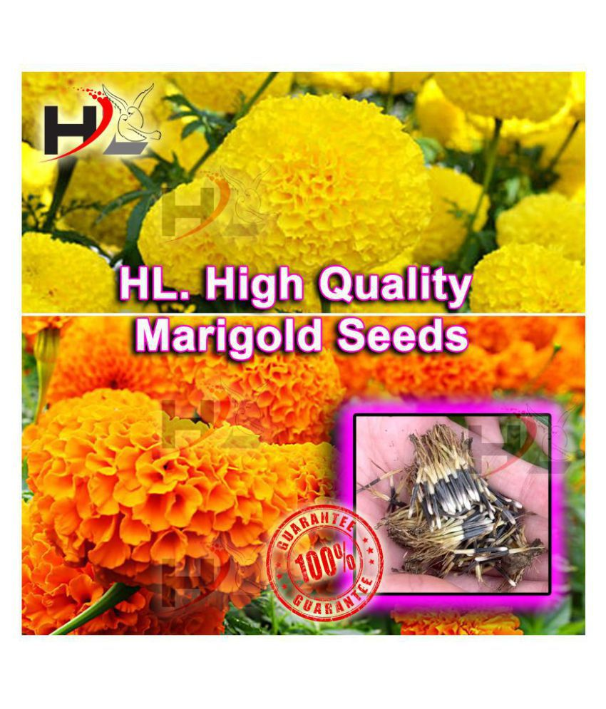 HL. High Quality MIX Marigold Seed 100% working