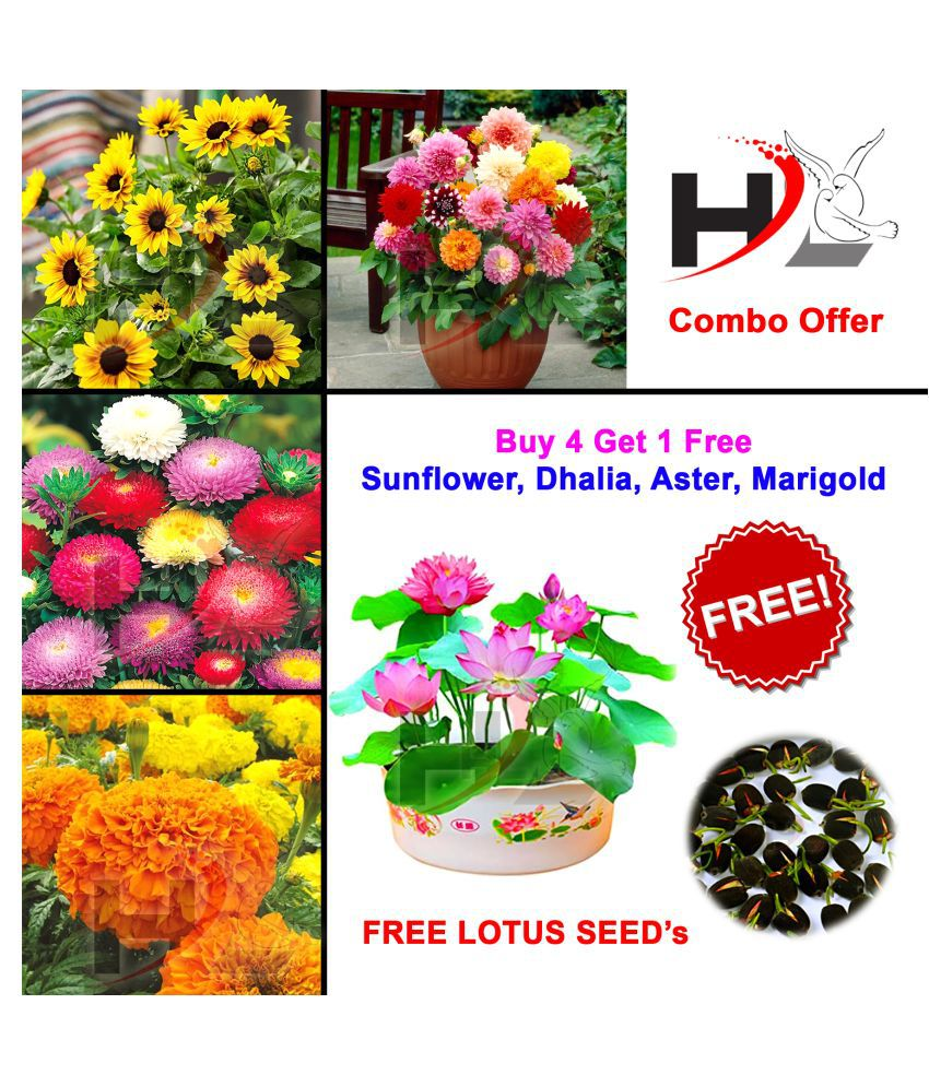 HL-COMBO-Sunflower, Dhalia, Aster, Marigold and FREE Lotus Seed's