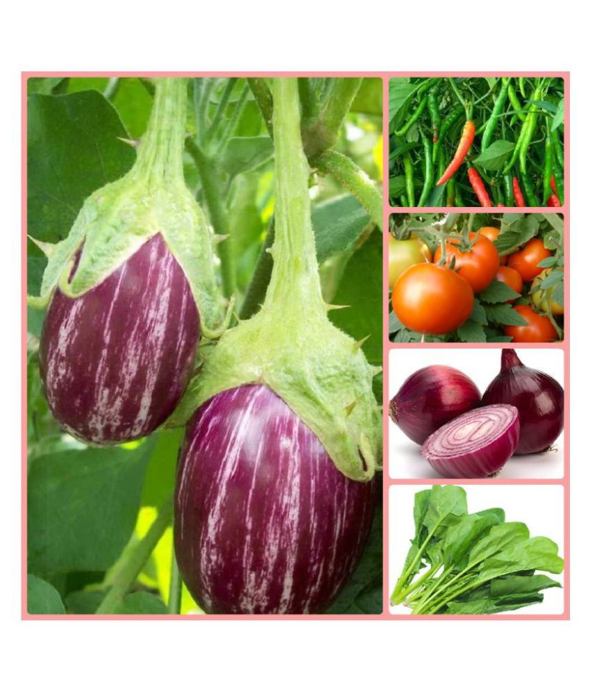 Vegetable Seeds Combo For Kitchen Garden 100 Seeds Easy To Grow With Instruction Manual Buy Vegetable Seeds Combo For Kitchen Garden 100 Seeds Easy To Grow With Instruction