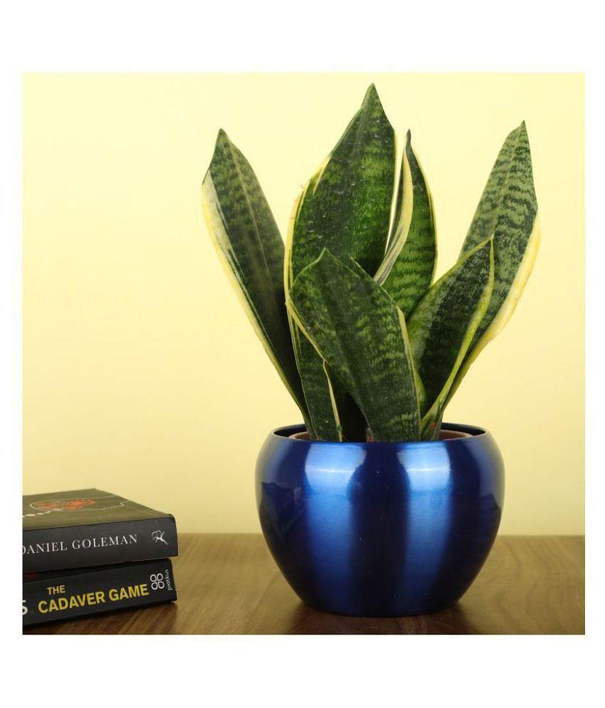 Homspurts Indoor Flower Pot