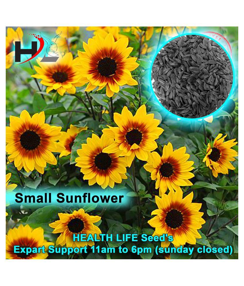 HL. Sunflower Seeds / Bird Food 900g