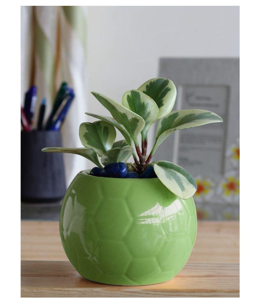 Ugaoo Football Ceramic Pot - Light Green